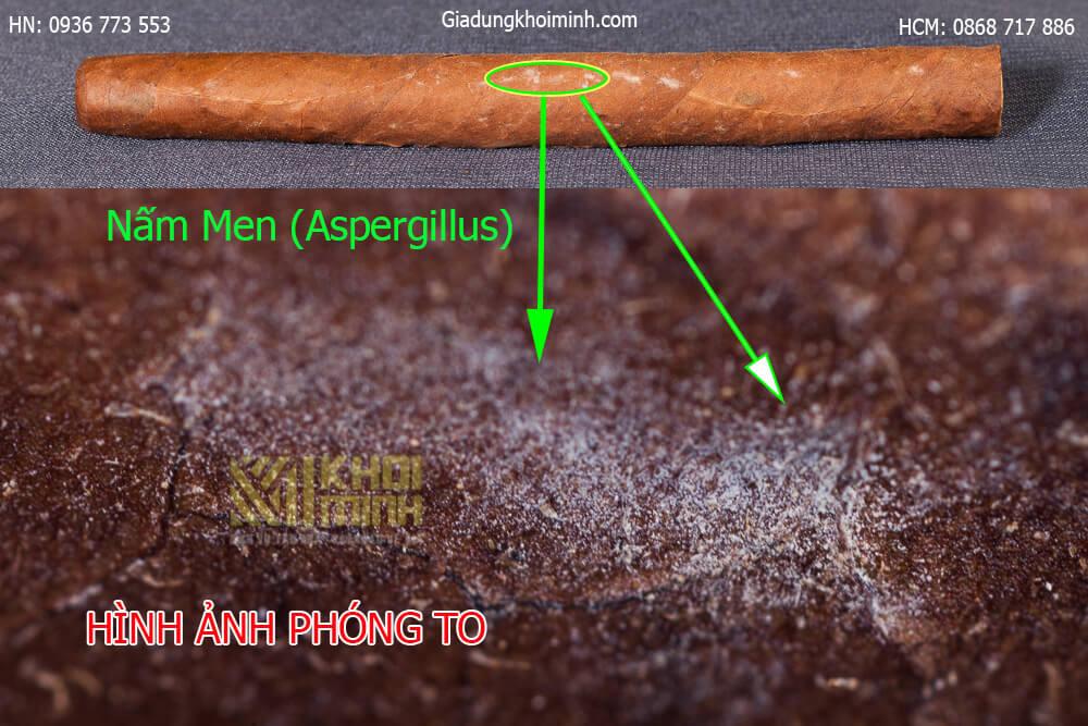 xì gà bị nấm mốc